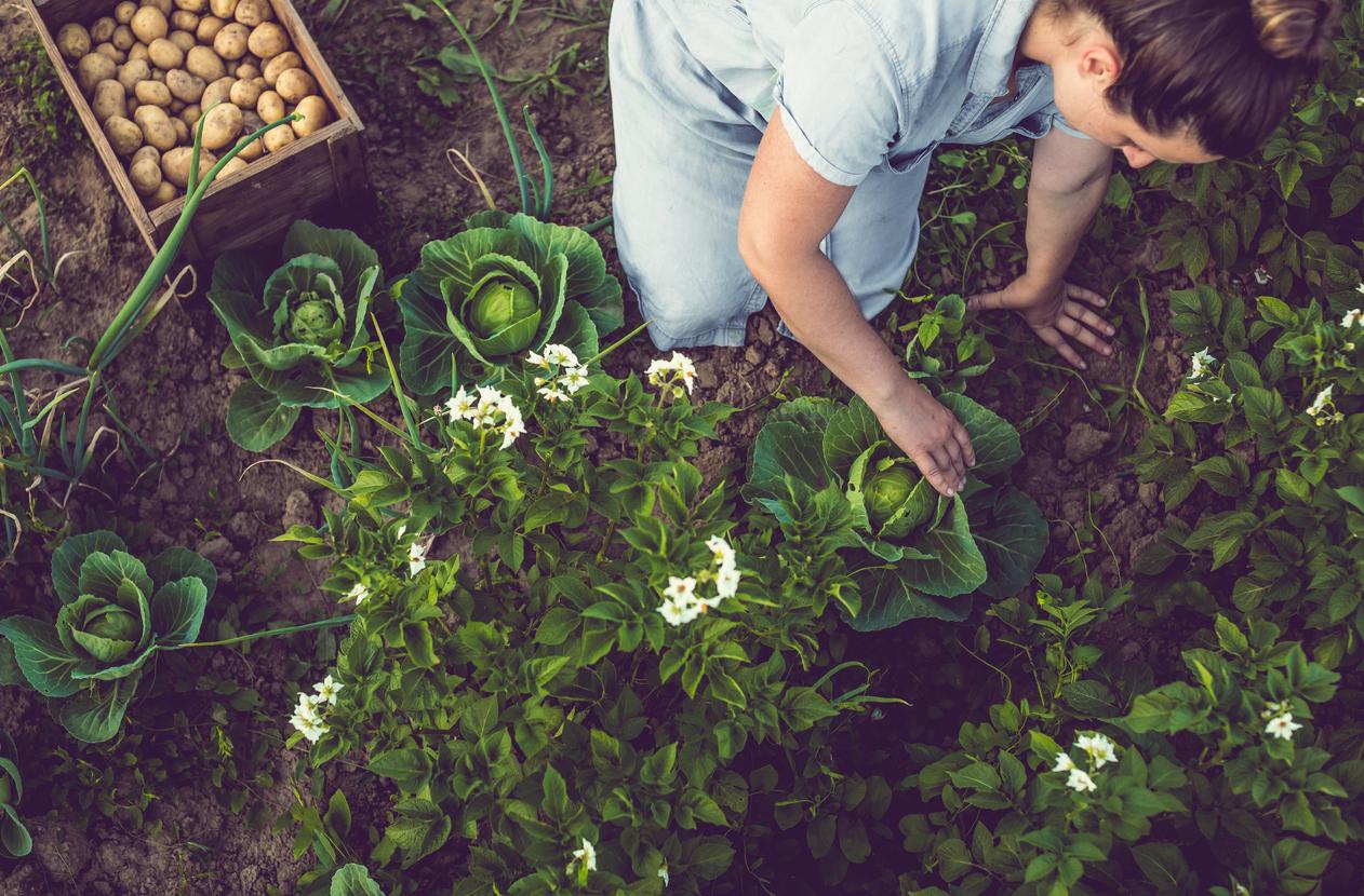 sogeres-normandie-plat-legumes-herbes-du-jardin